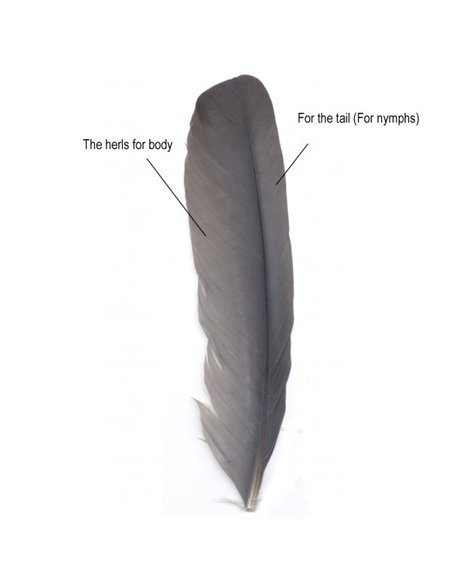 Feather from wings