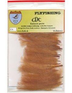 CDC, CA09 - Cinnamon
