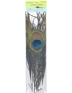 Peacock - Natural