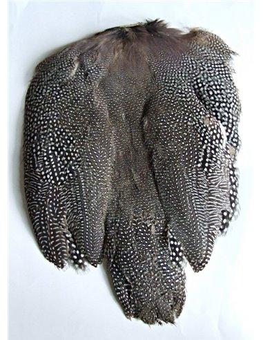 Guinea fowl scalp, GFS
