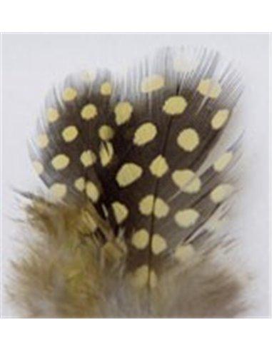 Guinea Fowl - Yellow, GFA 2